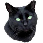 Allotment Cat
