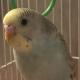 MalusLupo's avatar
