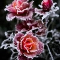 nevica1