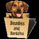 Jessica Shipman | Beagles and Bargains