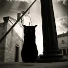 View Cathartidae's Profile