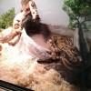 Mes reptiles. - dernier message par SophieGondry