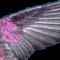 engelchenfiona