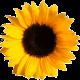 Blumenlotse