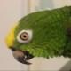 primetoxinz's avatar