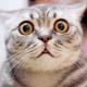 smithmarcw's avatar