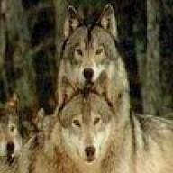 silverwolf77