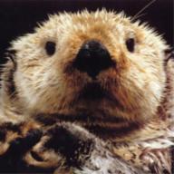 OttermusPrime