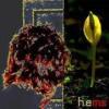 hems's icon