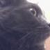 Alexander Strange's avatar