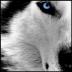notphenom's avatar