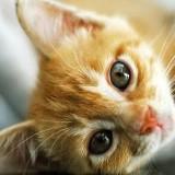cookiecat789
