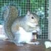 SquirrelRehab's Photo