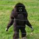 Pornelius the Gibbon