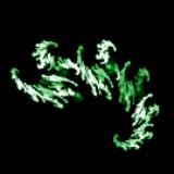 Green Meteor Team