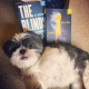 shihtzusandbookreviews