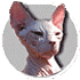 Profile picture of lorembolo