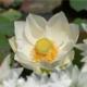Malethe29512's avatar