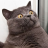 (cdep)illabout's avatar