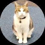 Cilla The School Cat