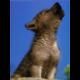 Wolf-der-Kleine