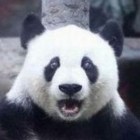 Avatar of Panda INC