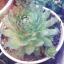 succulentstypes