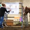 Perf. Horse Academy