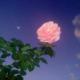 sofia rose cecilia