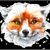 View Foxtails's Profile