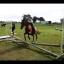 horseylover123