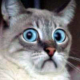 Derpcrawler's avatar