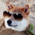 dch's avatar