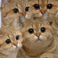 catbeans