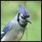 View BlueJayofEvil's Profile