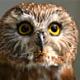 Profile picture of DecoDean