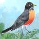 Robin Munn's avatar