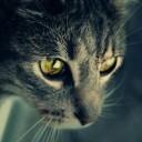 tabby_cat's gravatar image
