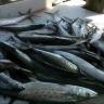 Galveston Fishing