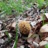 mushroom jake