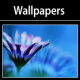 Free Wallpapers 4 Desktop