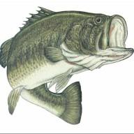 bassfisher6522