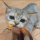 Dyrtd3's avatar