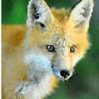 View Foxyez's Profile