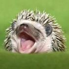 View Hedgehog's Profile