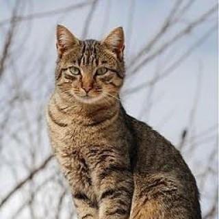 Le Cellar Cat