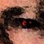 trsdek