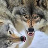 werdenwolf (DE1)