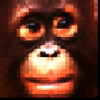 Monkeyminded