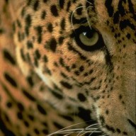 JaguarJo
